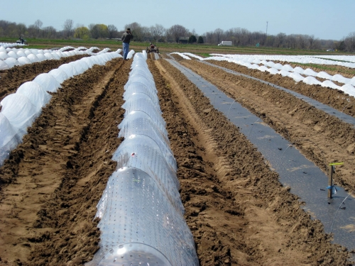 Row Covers For Frost Protection And Earliness In Vegetable