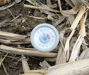 Thermometer in soil showing 48 degrees