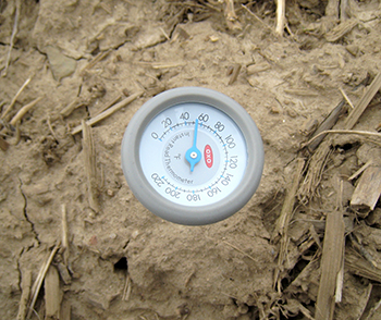 Thermometer in soil showing 51 degrees