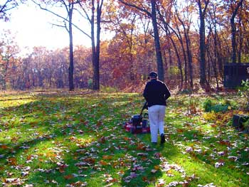 Smart Gardeners Mulch Fallen Leaves Into Lawn To Save