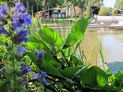 Smart lakefront plants - MSU Extension