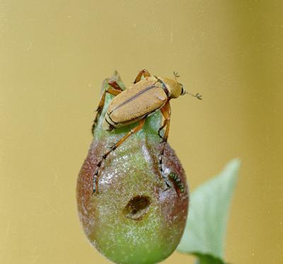 sevin bug spray instructions