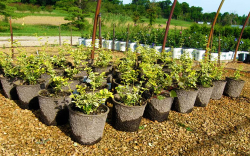 Pulp Containers For Nursery Plants