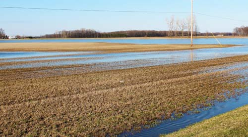 Flooded alfalfa field