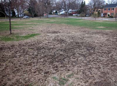 Dead Patches In Lawns Or Golf Course Roughs May Be From