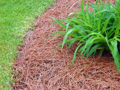 Mulching Landscape Beds Faqs Msu Extension