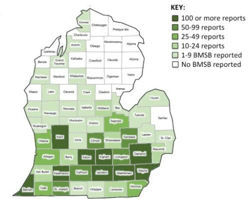 Map of Michigan counties that have received brown marmorated stink bugs reports