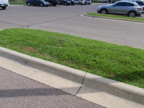 crabgrass in median