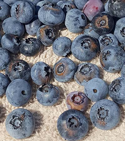 frost rings in blueberries