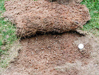 How can you tell if have grubs in your yard