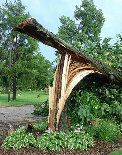 Large, downed trees can turn or pivot unexpectedly and are best handled by a professional arborist.