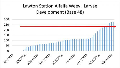 Lawton Station Alfalfa weevil larva development