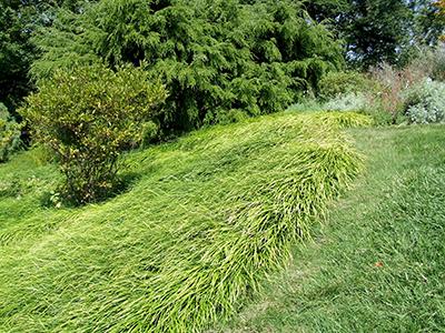 Smart Lawn Alternatives To Protect Pollinators MSU Extension