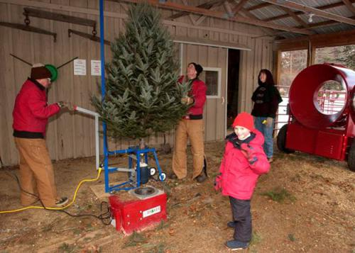 Tips For Success With Your First Real Christmas Tree Christmas Trees