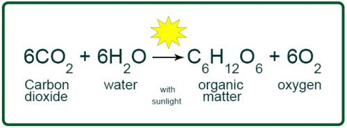 Image result for formula of photosynthesis