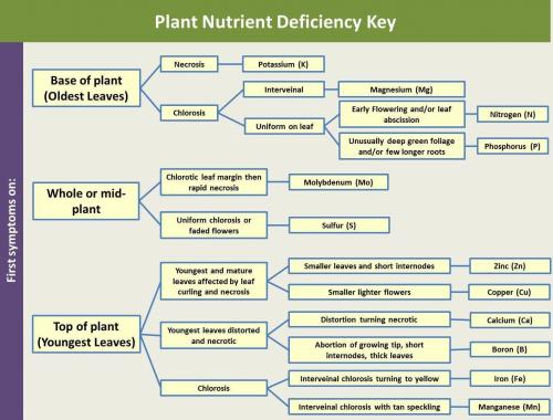 Six Steps To Identifying Nutrient Deficiencies In Ornamental Plants