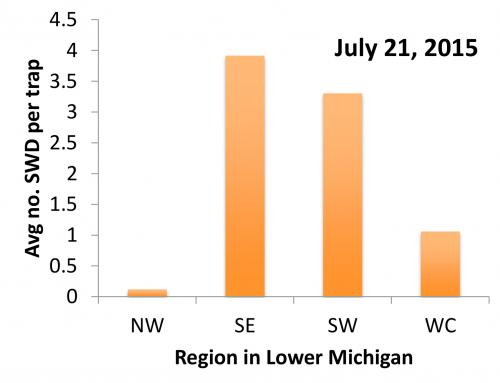 Graph of SWD caught in traps in Michigan