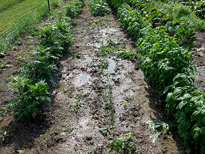 Smart fertilizer use A vegetable garden begins with a soil