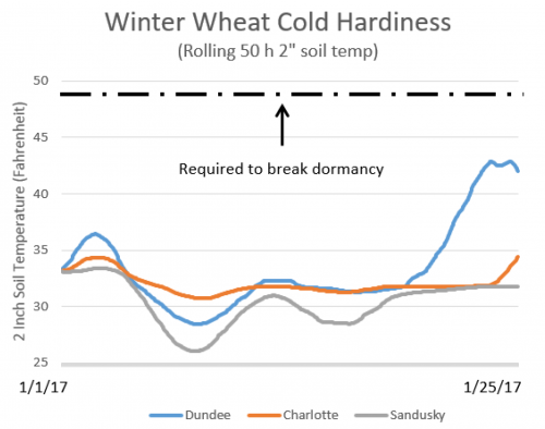 Graph of winter wheat cold hardiness