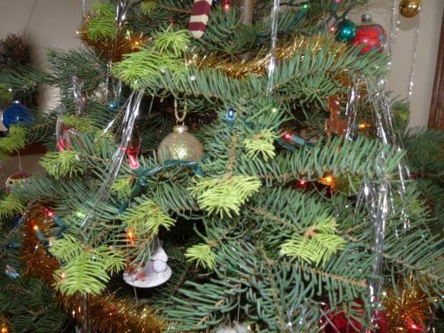 Why Is My Christmas Tree Beginning To Grow?