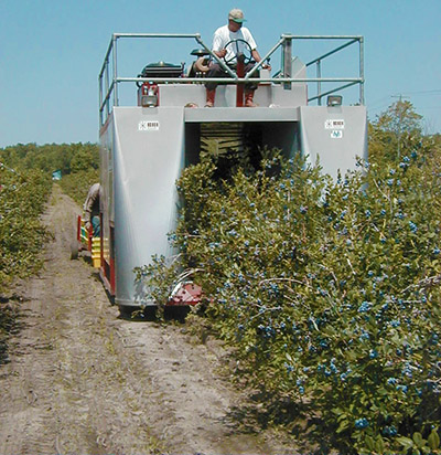 Blueberry harvester