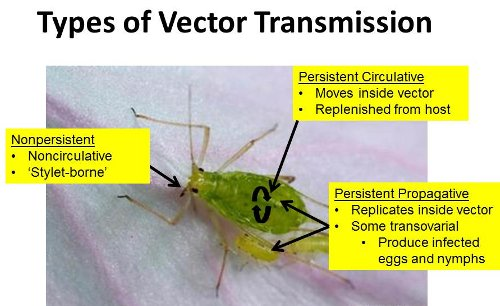 Vector transmission types