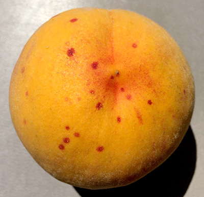Red spots on peach.