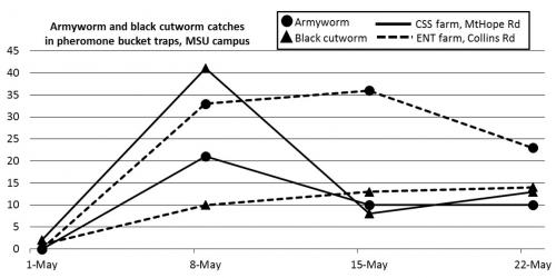 Graph of trap counts of armyworm and black cutworm catches in pheromone bucket traps during May 2016.