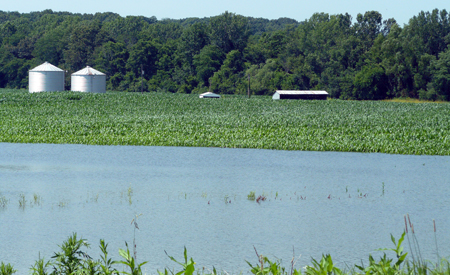 Flooding in a corn field.