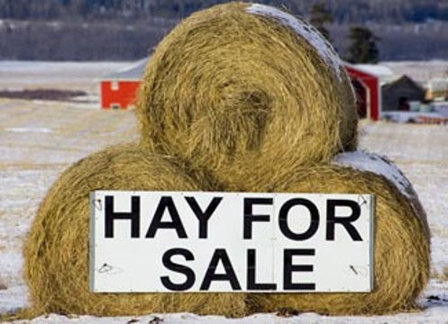 Winter hay for sale