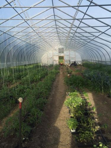 june hoophouse