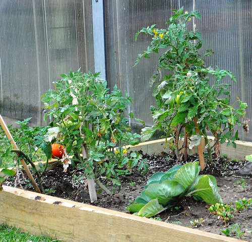 MSU Extension will host a community garden workshop