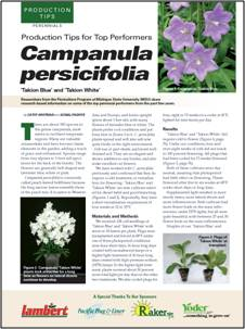 Production tips for top performers: Capanula persicifloia