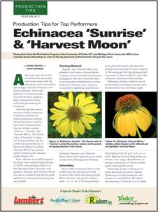 Productions tips for top performers: Echinacea 'Sunrise' & 'Harvest Moon'