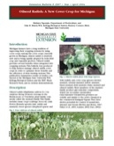 Oilseed Radish: A New Cover Crop for Michigan (E2907)