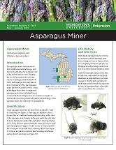 Asparagus Miner Facts (E3143)