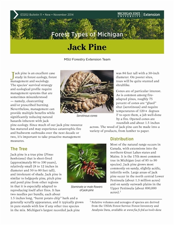 Forest Types of Michigan: Jack Pine (E3202-11)