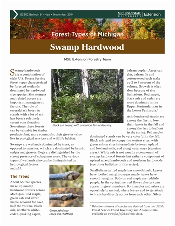 Forest Types of Michigan: Swamp Hardwood (E3202-6)