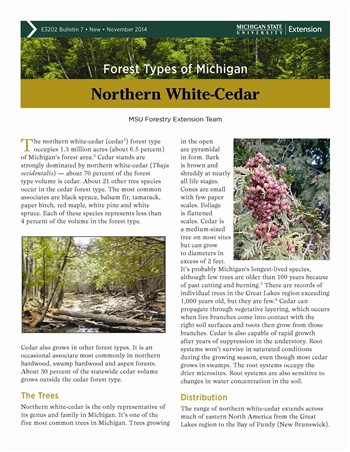 Forest Types of Michigan: Northern White-Cedar (E3202-7)