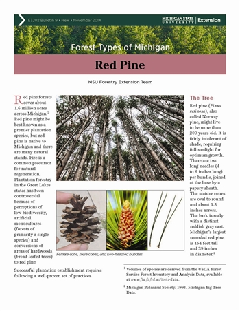 Forest Types of Michigan: Red Pine (E3202-9)
