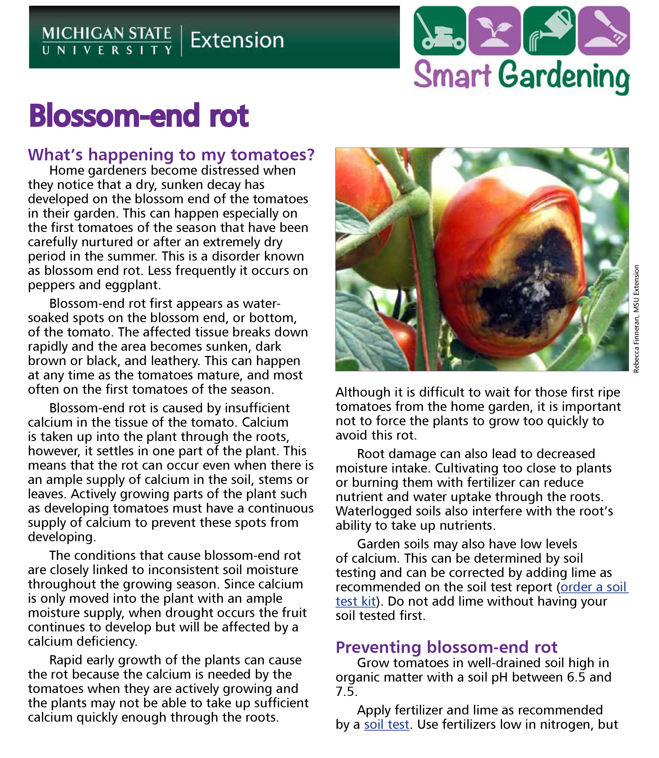 Blossom-end rot of tomato tip sheet