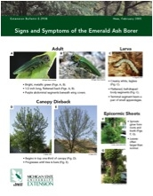 Signs and Symptoms of the Emerald Ash Borer (E2938)