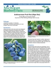 Michigan Blueberry Facts: Anthracnose Fruit Rot (Ripe Rot) (E3039)