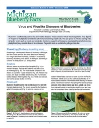 Michigan Blueberry Facts: Virus and Viruslike Diseases of Blueberries (E3048)