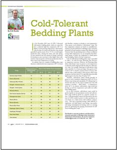 Cold-tolerant bedding plants