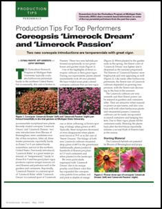 Production tips for top performers: Coreopsis 'Limerock Dream' and 'Limerock Passion'
