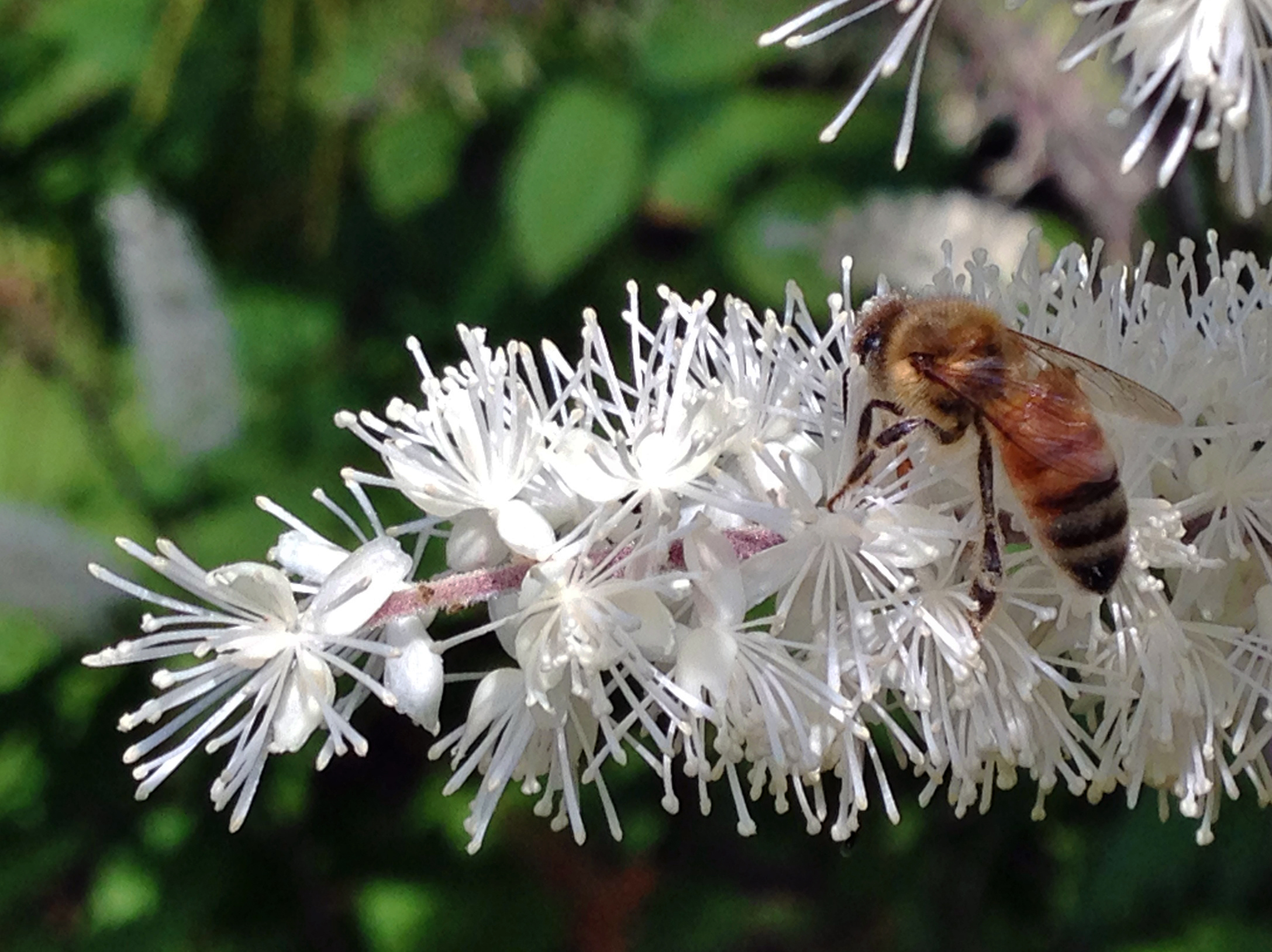 How to protect and increase pollinators in your landscape