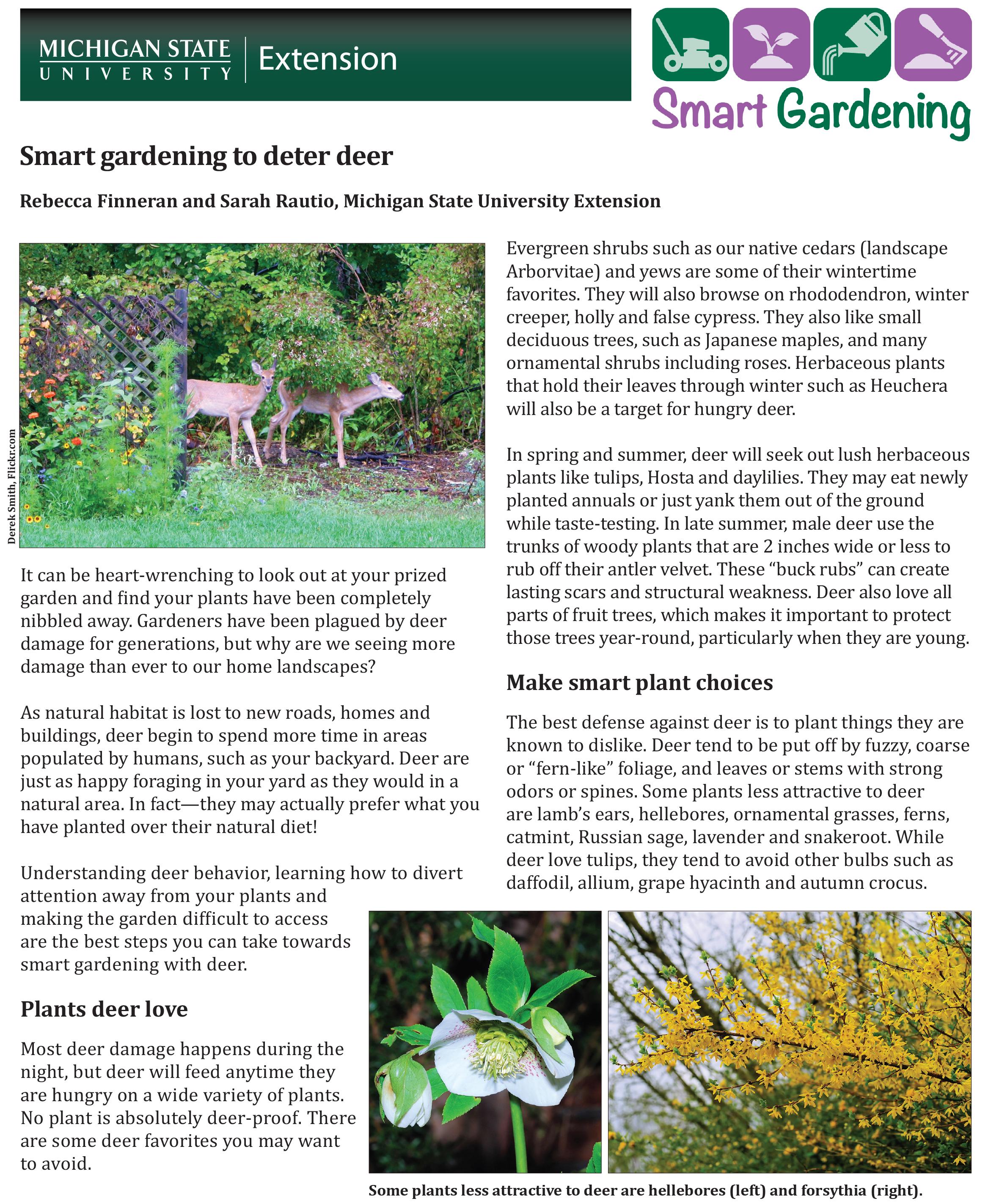 smart gardening to deter deer msu extension