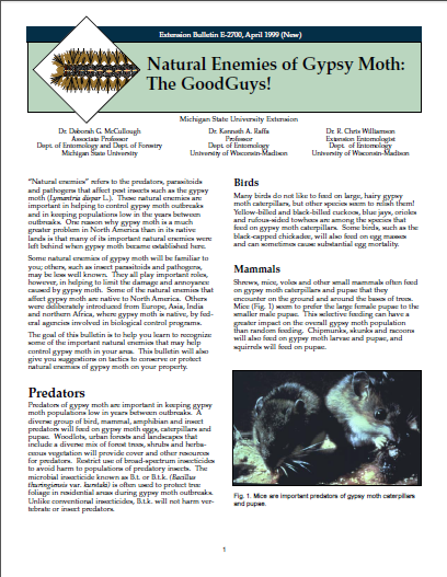 Natural Enemies of the Gypsy Moth: The Good Guys! (E2700)