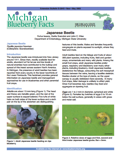 Michigan Blueberry Facts: Japanese Beetle (E2845)